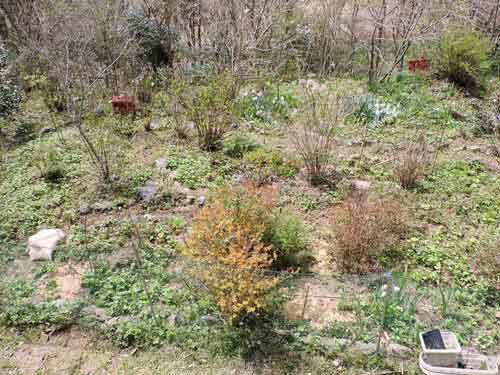 ログ前の庭の草引き