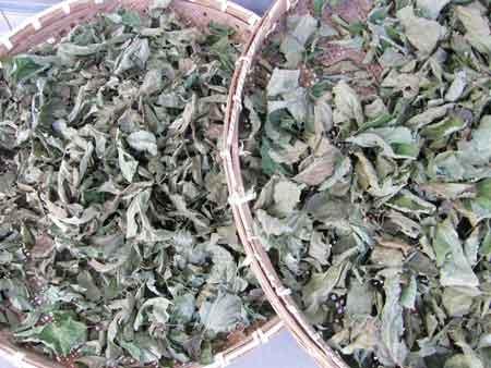 山桑茶乾燥中