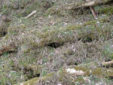 マメザクラの下の敷地