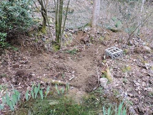ログ前の小池1