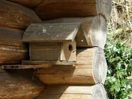 ログ脇の巣箱