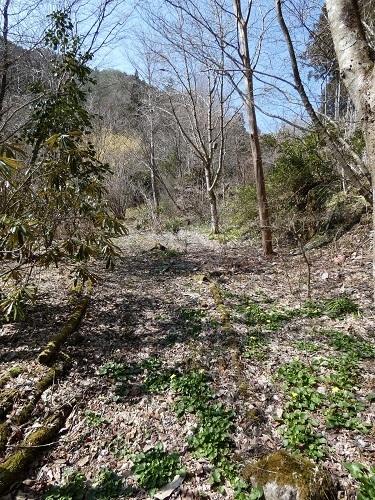 庭奥の小道