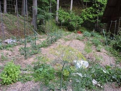ミニ菜園の今