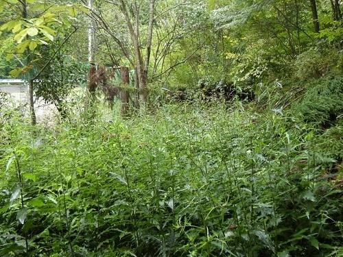 庭奥の盛り土部分