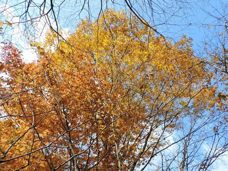 育樹園の紅葉1