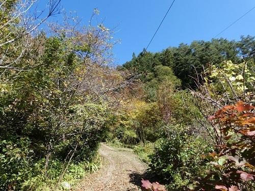 秋色が進む庭1