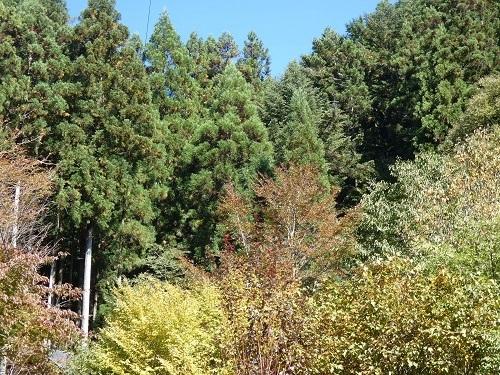 秋色が進む庭2