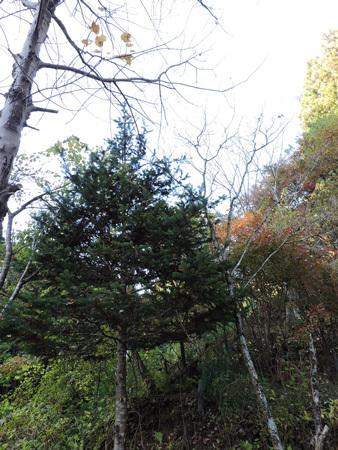 育樹園の紅葉3