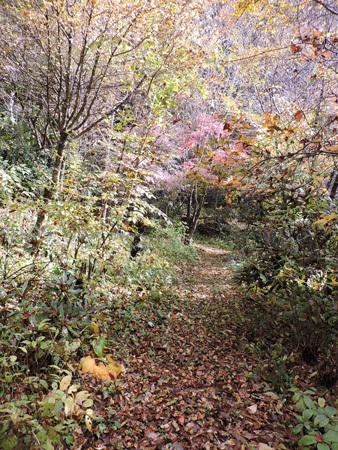 庭奥への小道