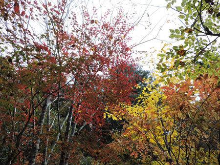 庭奥の紅葉1