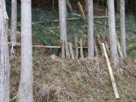 椎茸のホダ木を本伏せする。