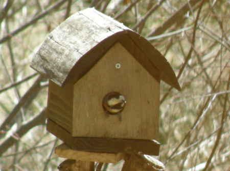 ウリハダカエデの巣箱