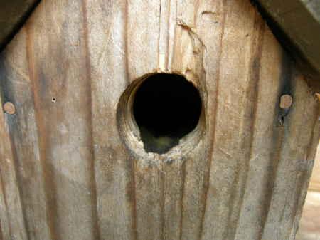 ログ脇の巣1