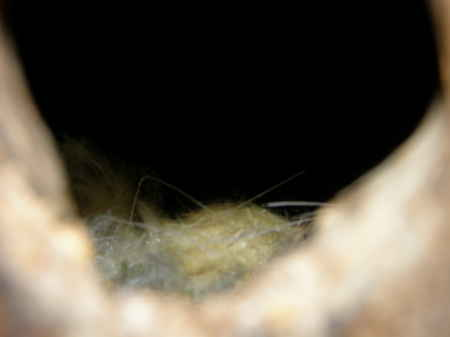 ログ脇の巣2