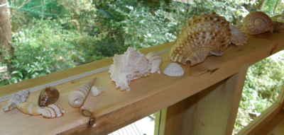 貝殻も好き