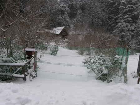 野迫川はまたまた雪