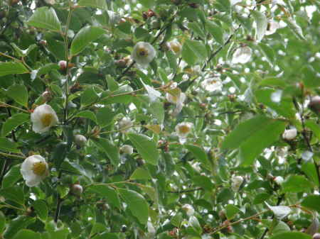 桃色ナツツバ1